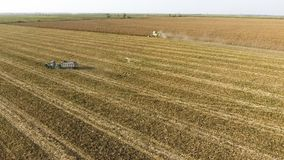 Harvester harvests corn. Collect corn cobs with the help of a combine harvester. Ripe corn on the field. Stock Photos