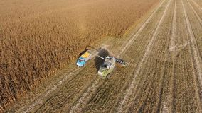 Harvester harvests corn. Collect corn cobs with the help of a combine harvester. Ripe corn on the field. stock footage