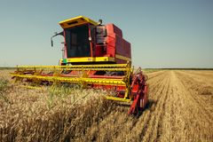 Harvester harvests wheat on field royalty free stock photography