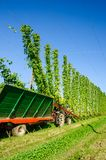 Harvester on a Hop Field Stock Images