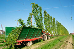 Harvester in a Hop Plantage Royalty Free Stock Photos