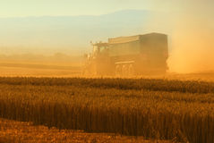 Harvester machine harvest cereal wheat Royalty Free Stock Photo