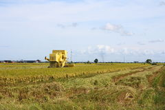 Harvester Machine on Paddy Field Stock Image