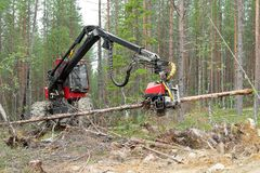 Harvester machine working in a forest, chopping a young pine tree