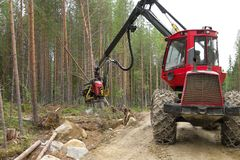 Harvester machine working in a forest, chopping a young pine tree. Wood industry royalty free stock photography