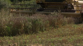Harvester machinery thrash farm corn grain field. stock video footage