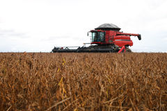 Harvester making harvesting soybean field . Royalty Free Stock Image