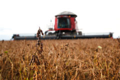 Harvester making harvesting soybean field . Stock Photo