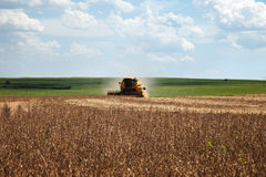 Harvester making harvesting soybean field - Mato Grosso State - Stock Image