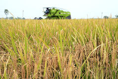 HARVESTER AND PADDY FIELD CROPS Stock Photo