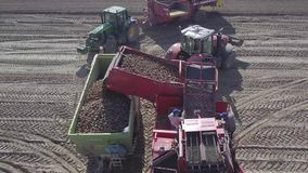Harvesting potatoes with a combine stock footage