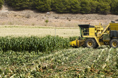 Harvester reaps corn Royalty Free Stock Image