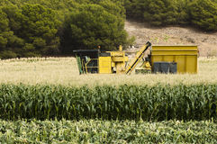 Harvester reaps corn Royalty Free Stock Photo