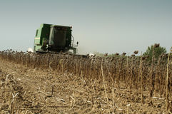 Harvester reaps sunflowers Royalty Free Stock Image