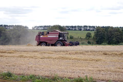Harvester removes the grain from the field Royalty Free Stock Images