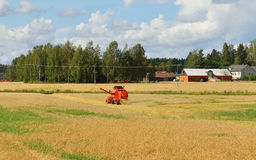 Harvester removes rye in field Royalty Free Stock Images