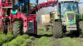Harvester and a tractor to harvest carrots stock video