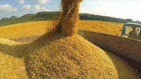 Harvester Unloading Grains Into Trailer stock video footage