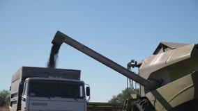 Harvester Unloads Grain stock video