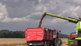 Harvester unloads wheat grain on farmland field background. Combine harvester unloads wheat grain into tractor trailer on background of farmland field and cloudy stock video