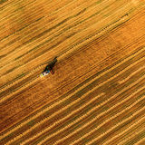 Harvester working in field and mows wheat. Ukraine. Aerial view. Royalty Free Stock Photography