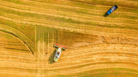 Harvester working in field and mows wheat. Ukraine. Aerial view. royalty free stock images