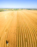 Harvester working in field and mows wheat. Ukraine. Aerial view. Royalty Free Stock Photo