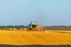 Harvester working in field and mows wheat. Ukraine. Stock Photography