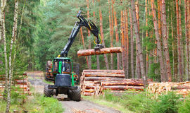 The harvester working in a forest. Stock Photography