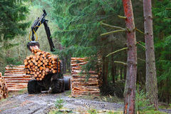 The harvester working in a forest. Royalty Free Stock Photography