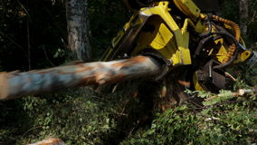 Harvester working in middle of a forest stock footage