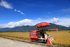 Harvesters on Paddy Field in Taidong,Taiwan Stock Photography
