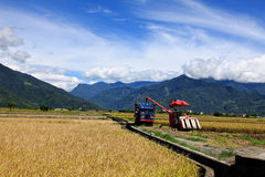 Harvesters on Paddy Field in Taidong,Taiwan Royalty Free Stock Images