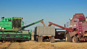Harvesters unloads grain into truck. Summer. Field. Sunny weather. The two harvesters unloads the grain from the hopper into the back of the truck stock video