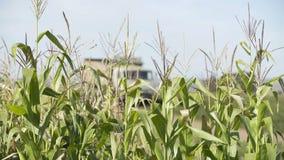 玉米收获农民耕种玉米 农业玉米收获金玉米 生态农 股票视频