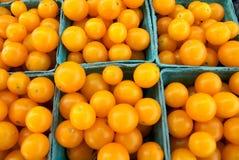 harvestII amarelo Foto de Stock Royalty Free