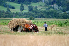 Harvesting. Peasant harvesting some straw on field Royalty Free Stock Photos