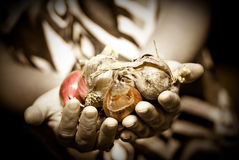 Harvesting. Two hands holding onions bulbs Royalty Free Stock Photography