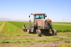 Harvesting alfalfa Stock Images