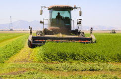Harvesting alfalfa Royalty Free Stock Photos