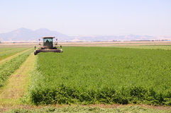 Harvesting alfalfa Royalty Free Stock Photo
