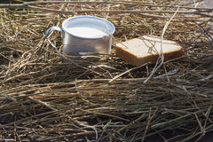 After harvesting. Aluminium mug of milk and a loaf of fresh bread on a background of dry cereal stock photos