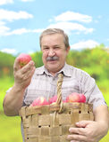 Harvesting a apple Stock Photography