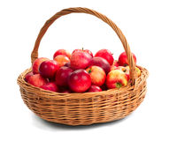 Harvesting. Apple. Harvesting. A basket with red ripe apples Royalty Free Stock Images
