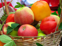 Harvesting apples, leaves and sweet peppers Stock Images