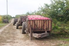 Harvesting of apples in the orchard. Containers with apples. Rustic style, selective focus. Royalty Free Stock Images
