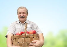 Harvesting an apples Royalty Free Stock Photography