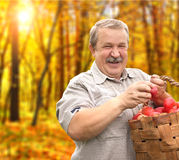 Harvesting an apples Stock Images