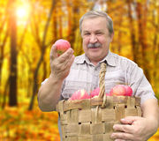 Harvesting an apples Royalty Free Stock Photo