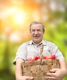 Harvesting an apples Stock Photography